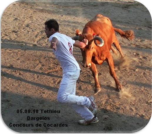 05 08 18 tethieu dargelos concours de cocardes