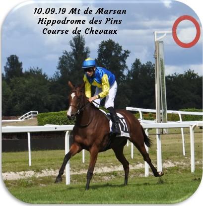 10 09 19 mt de marsan hippodrome des pins course de chevaux