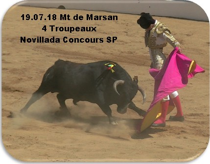 19 07 18 mt de marsan 4 troupeaux novillada concours s p