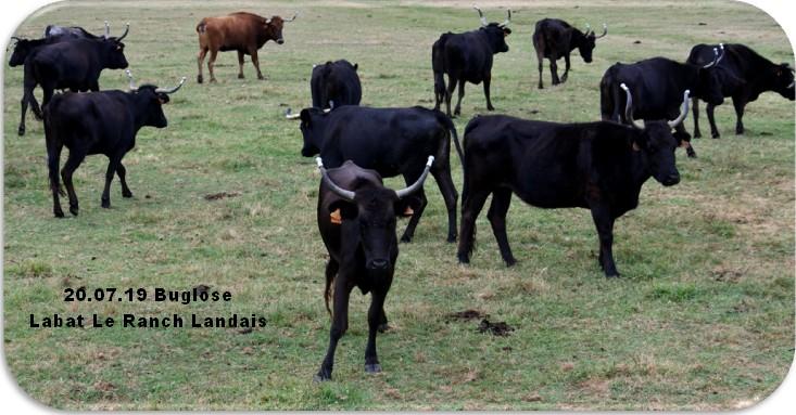 20 07 19 buglose le ranch landais
