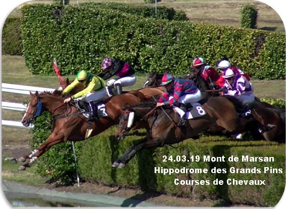 24 03 19 mont de marsan hippodrome courses de chevaux