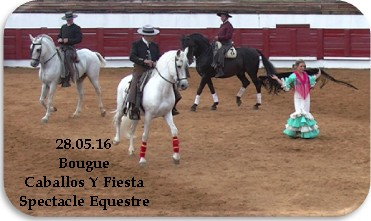 Bougue equestre