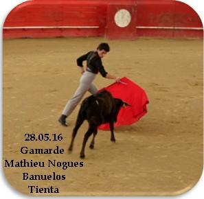 Gamarde 4